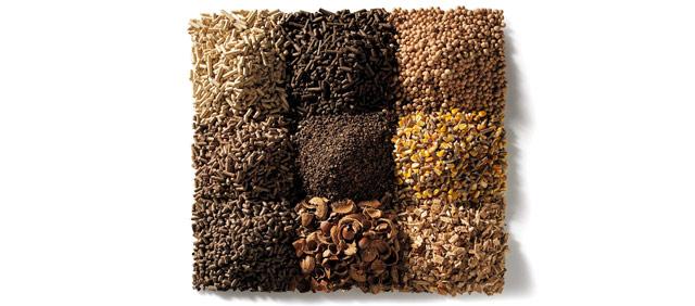 biomassalegnosa